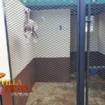Villa Siesta Pet Retreat - Flash the jumping Whippet