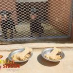 Villa Siesta Pet Retreat - Waiting for a treat