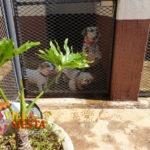 Villa Siesta Pet Retreat - Getting ready for dinner