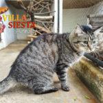 Villa Siesta Pet Retreat - Nunu our blind guest