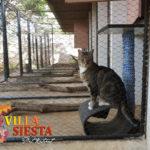 Villa Siesta Pet Retreat - Pisvoet the cat
