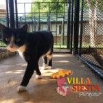 Villa Siesta Pet Retreat - Sylvester the cat
