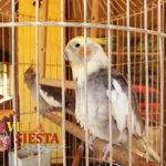 Villa Siesta Pet Retreat - Cockatiels