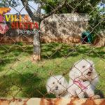 Villa Siesta Pet Retreat - Fluffy and Chloe