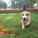 Villa Siesta Pet Retreat - Cleo the Corgi