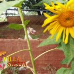 Villa Siesta Pet Retreat - Flash the Whippet