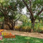 Villa Siesta Pet Retreat - Yellow sunflowers and green grass