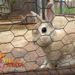 Villa Siesta Pet Retreat - Happy bunny