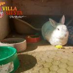 Villa Siesta Pet Retreat - relaxed rabbit