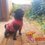 Villa Siesta Pet Retreat - Deogi Pug