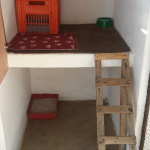 Cattery single for 1 to 3 cats from the same family. More cats can go into the larger communal cattery.