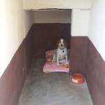 Single kennel
