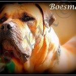 boesman